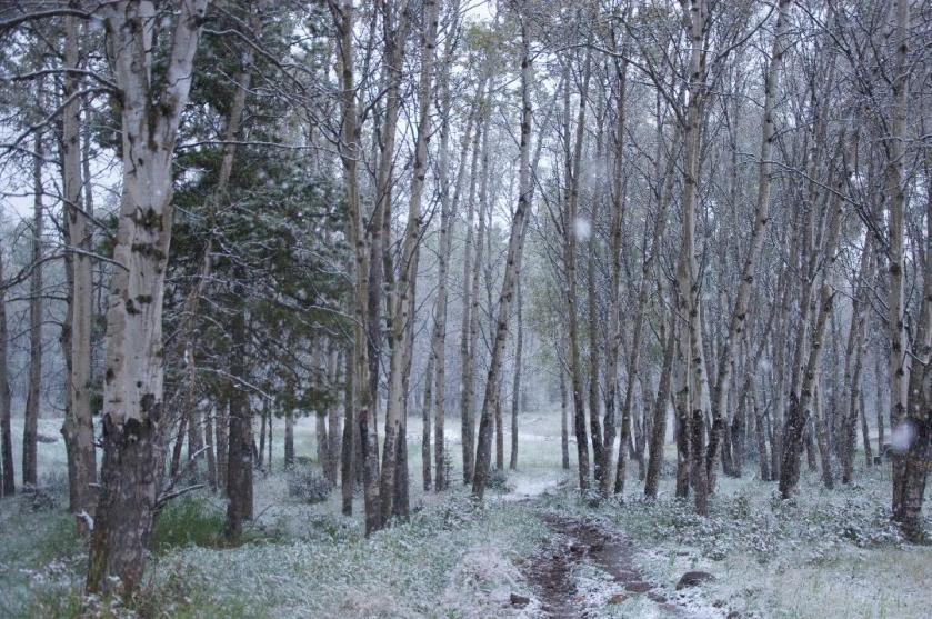 aspen forest snow.jpg